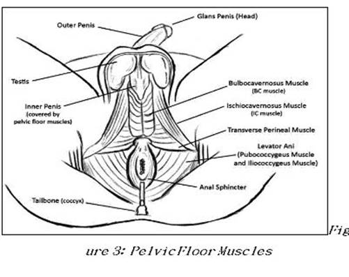 Conscious Cock Workout